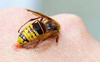 Чем опасен укус пчелы?