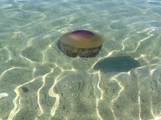 Ожог медузы: что делать и чем лечить
