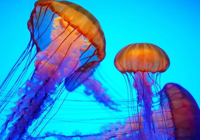 Укус медузы: симптомы, первая помощь, лечение