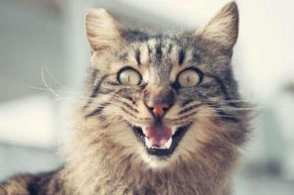 Укус кошки: что делать, первая помощь, лечение, последствия