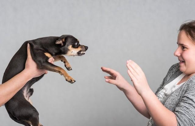 Укус собаки: причины, первая помощь, лечение, последствия