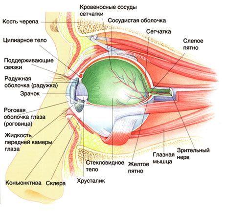 Ушиб глазного яблока (глаза): первая помощь, лечение, последствия